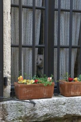 le chien à sa fenêtre