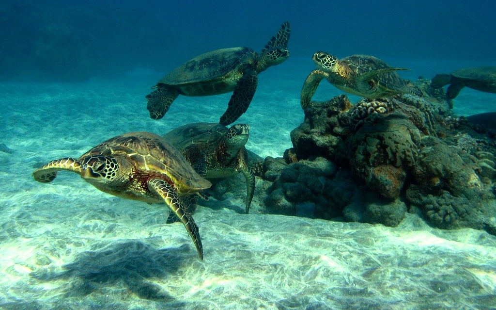 Wallpaper For Desktop Background 3d Herd Of Turtles Bluewavechris Flickr
