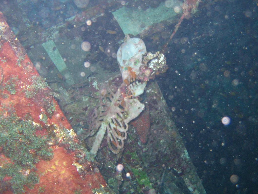 Shipwreck Bodies Related Keywords Shipwreck Bodies Long