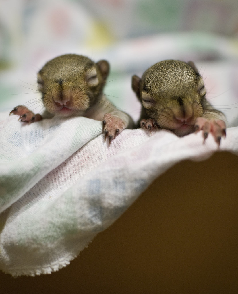 Baby squirrels  I made the trek back to visit my family