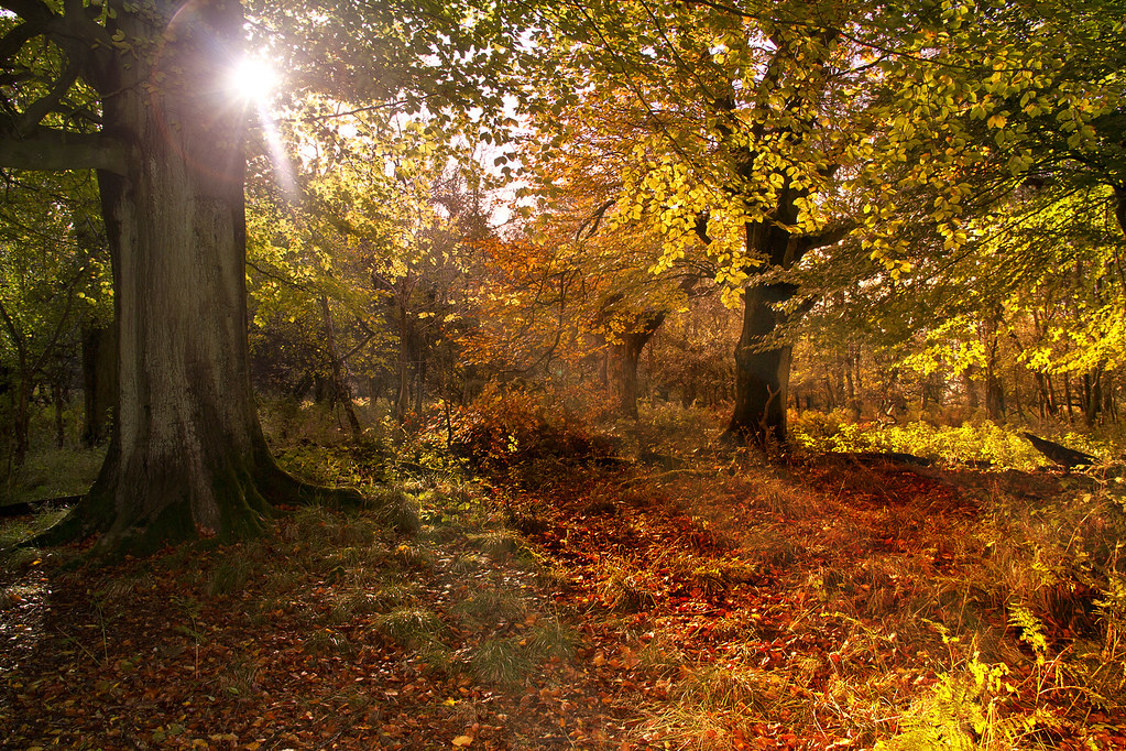 Wallpaper For Fall And Autumn Autumn Woodland Nov 2013 Lakes4life Flickr
