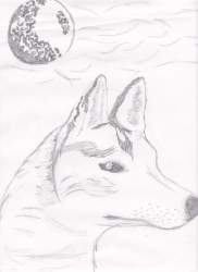 wolf wolves majestic drawing