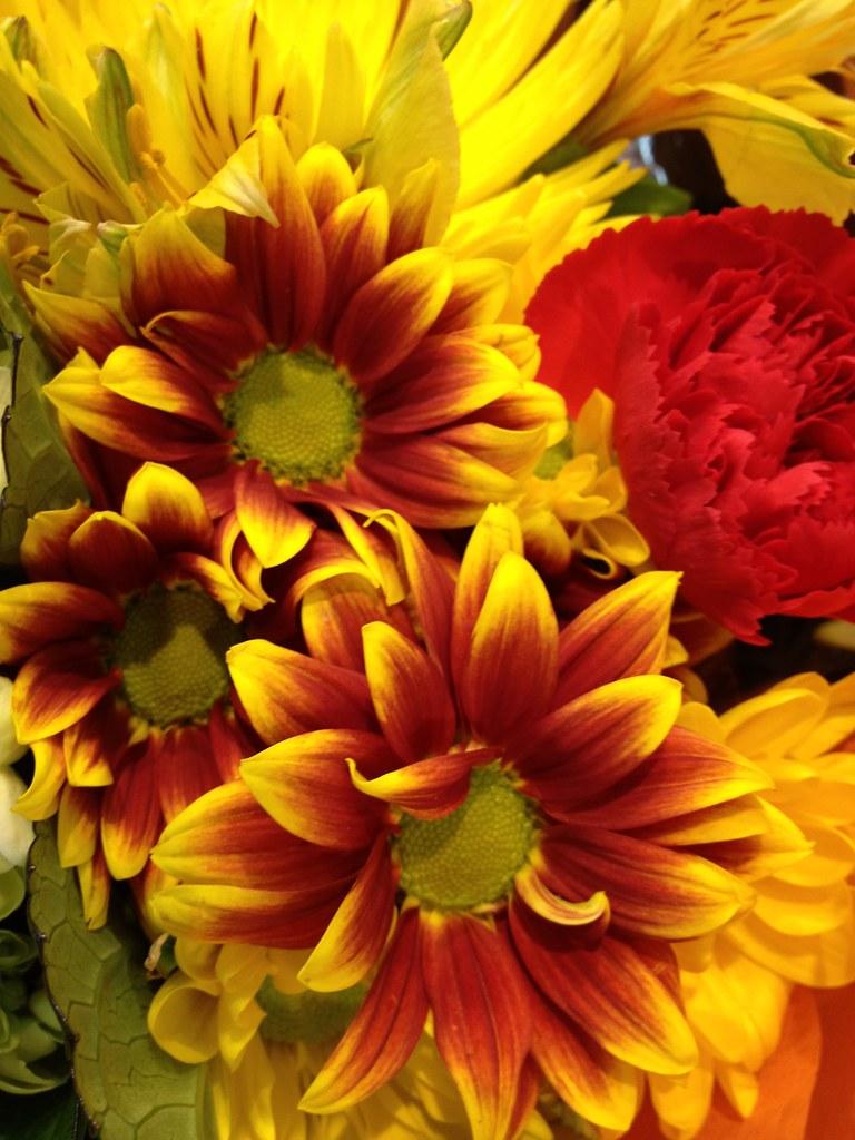 Flowers by Patty Vicknair  Various Photos of Flowers taken   Flickr