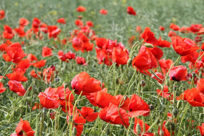 What's Open and Closed Remembrance Day 2018