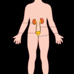 Excretory System Diagram Basic Bosch Pbt Gf30 Wiring | Illustration Used In Gr 7-9 Natural Scien… Flickr