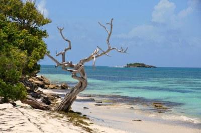 ultimate island beach bar ........... | desolate island ...