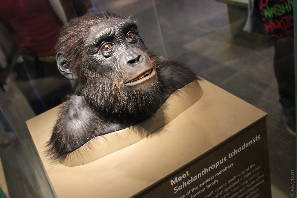 Sahelanthropus tchadensis  At the Smithsonians National