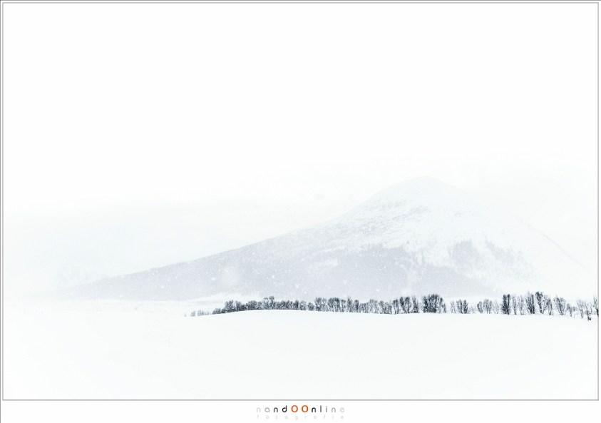 Een landschap gevangen in een sneeuwbui, waar een bomenrij de aandacht trekt. Niets meer, niets minder.