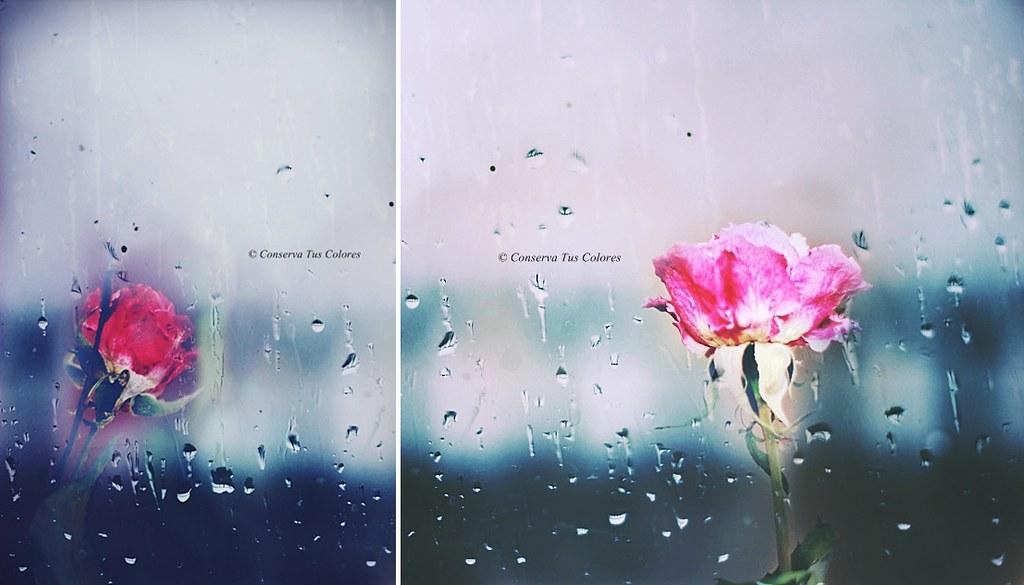 SoledadLluvia y Rosas  Un da como hoy tumblr