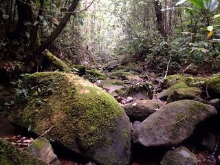 trekking on mount kinabalu