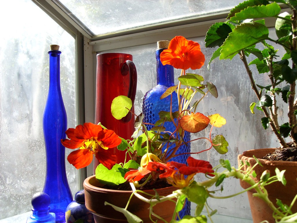 kitchen greenhouse window top sink winter blooms in brought