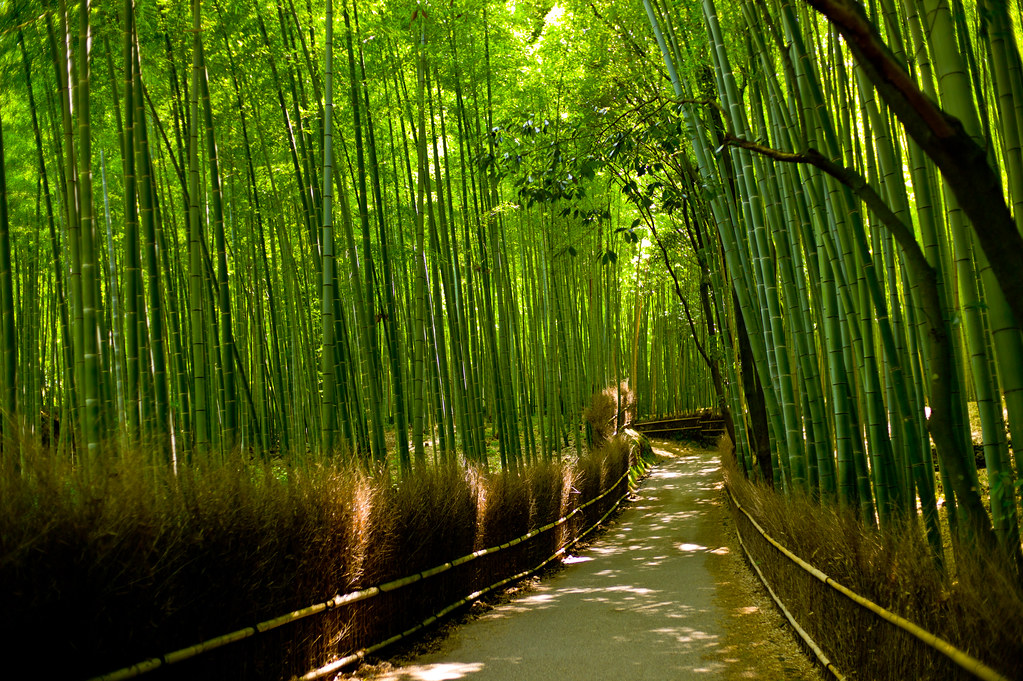 M9  Arashiyama Bamboo Forest  Yeah you know what it is