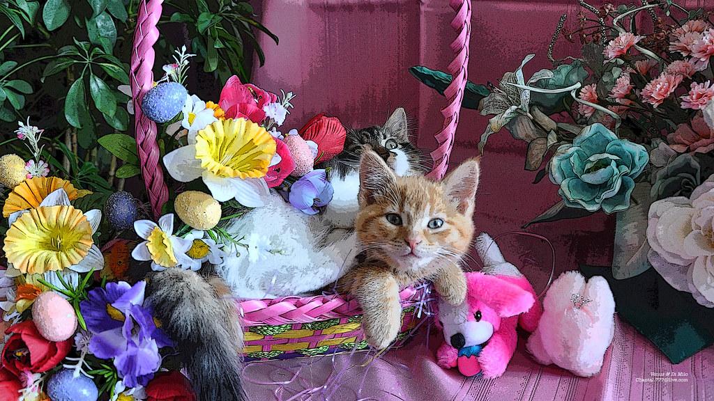Cute Orange Kittens Wallpaper Cute Easter Kitty Cat Kittens In Home Garden Art Decor Wit