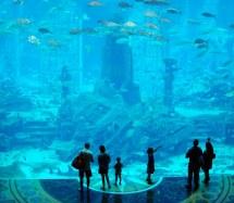 Aquarium Atlantis Dubai Furtive