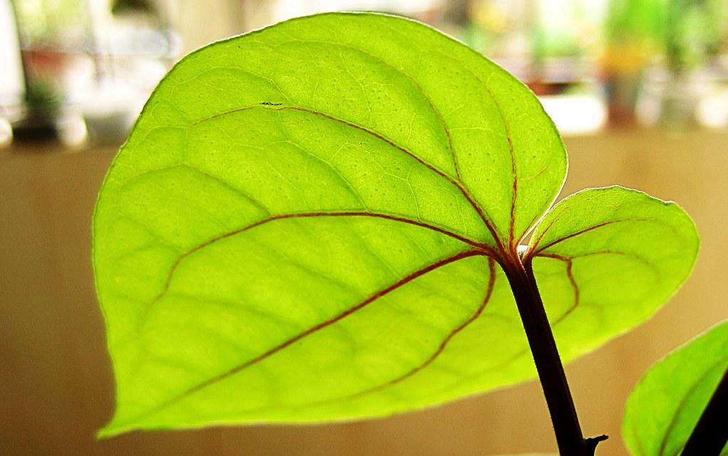 imagenes de hojas