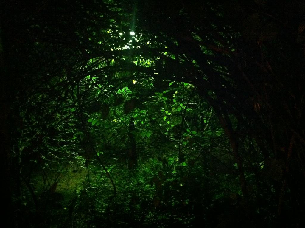 Animated Desktop Wallpaper Hd Night Jungle Will Power Flickr