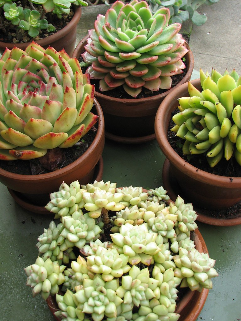 Some of our potted succulent collection  We have a