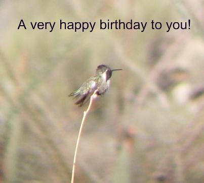 Arizona Hummingbird Happy Birthday Digi Scope Through