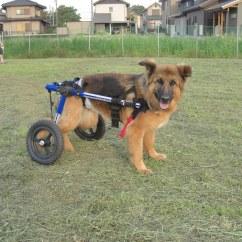 Wheel Chairs For Dogs Wicker Chair Cushions 22x22 German Shepherd Dog Wheelchair A