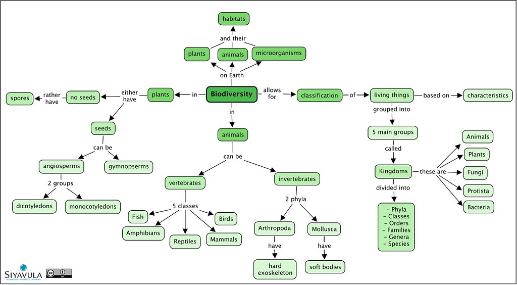 Gr 7  Ch 2  Biodiversity  A SUMMARY concept map of the
