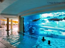 Shark Tank ~ Pool | The Golden Nugget in Downtown Las ...