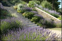 Terraced Garden in Provence | Completed stone steps and ...