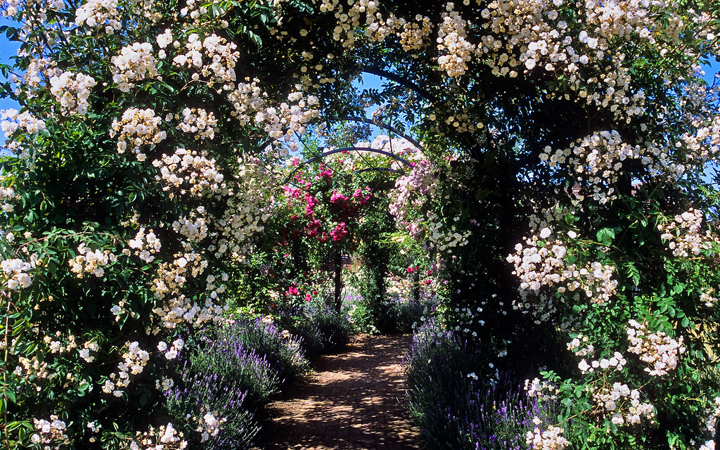 Royal National Rose Society Gardens The Gardens Of The