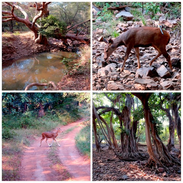 Reserva Tigres Ranthambore