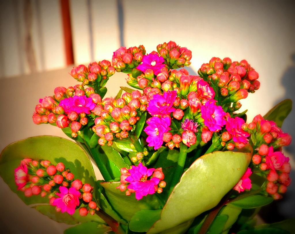piante grasse e succulente