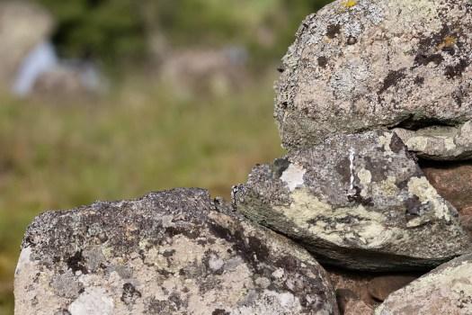 Stenarna