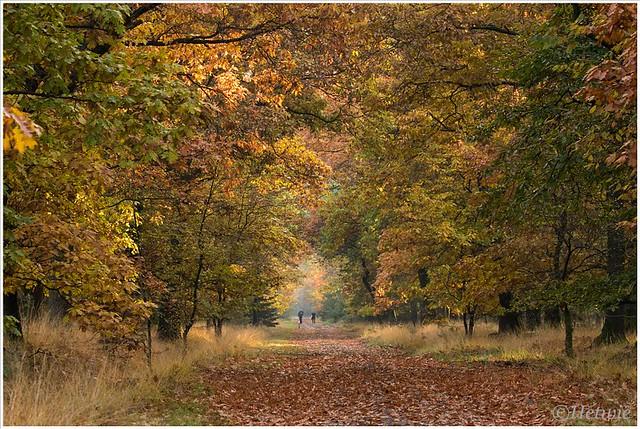 Herfst op de Stippelberg