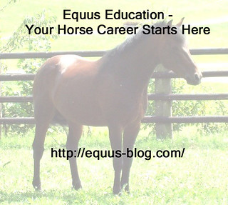 Saddle Fitting as a Horse Career | Equus Education