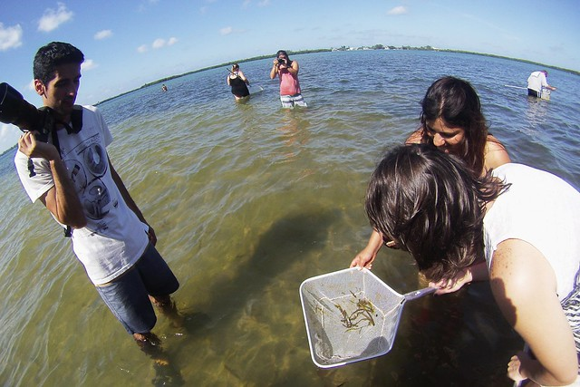 Wading Trip with the Charlotte Harbor Environmental Center at Cedar Point, Englewood, Fla., May 16, 2015