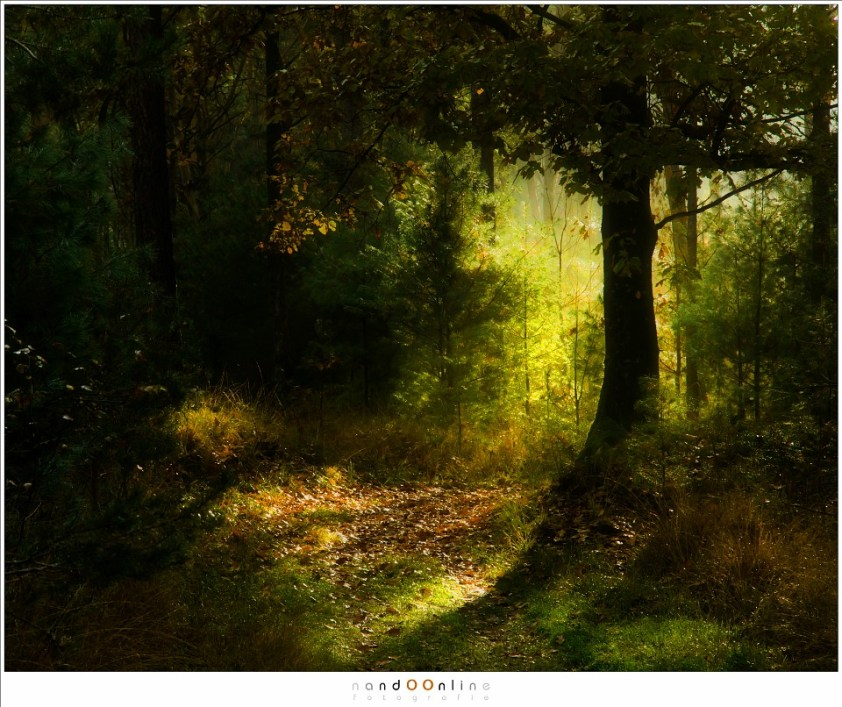 Herfst impressies. In het bos speelt het licht een spel met je en weet zich soms te verbergen om de hoek van een pad of achter een boom (80mm (equi FF: 120mm; ISO500; f/8; t=1/125sec; -1,3EV)