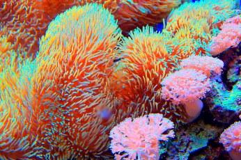 red sea plants