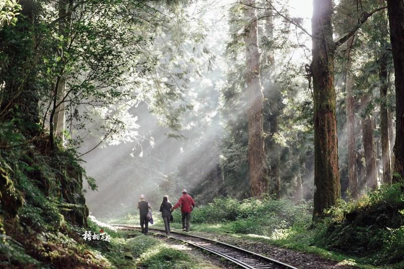 10|森林中的層層疊疊光與你同在