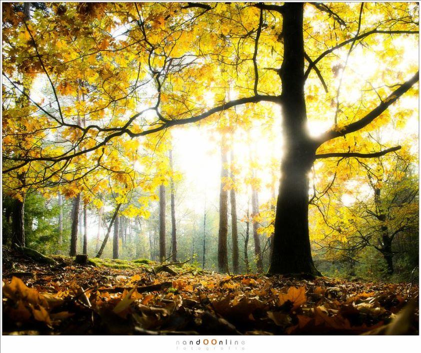 Herfst impressies. De herfstbladeren aan de boom, klaar om te vallen en lege takken achter te laten. (16mm (equi FF: 24mm); ISO200; f/7,1; t=1/8sec; +2EV)