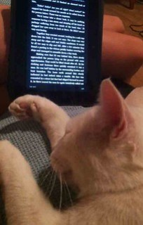 Missy Reading on the Kindle Media Consumed