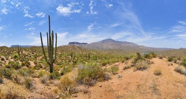 sonoran desert landscape apache