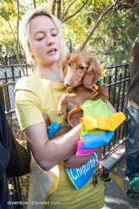 Halloween Dog Costume_Chiquita Banana Carmen Miranda_Sofie ...