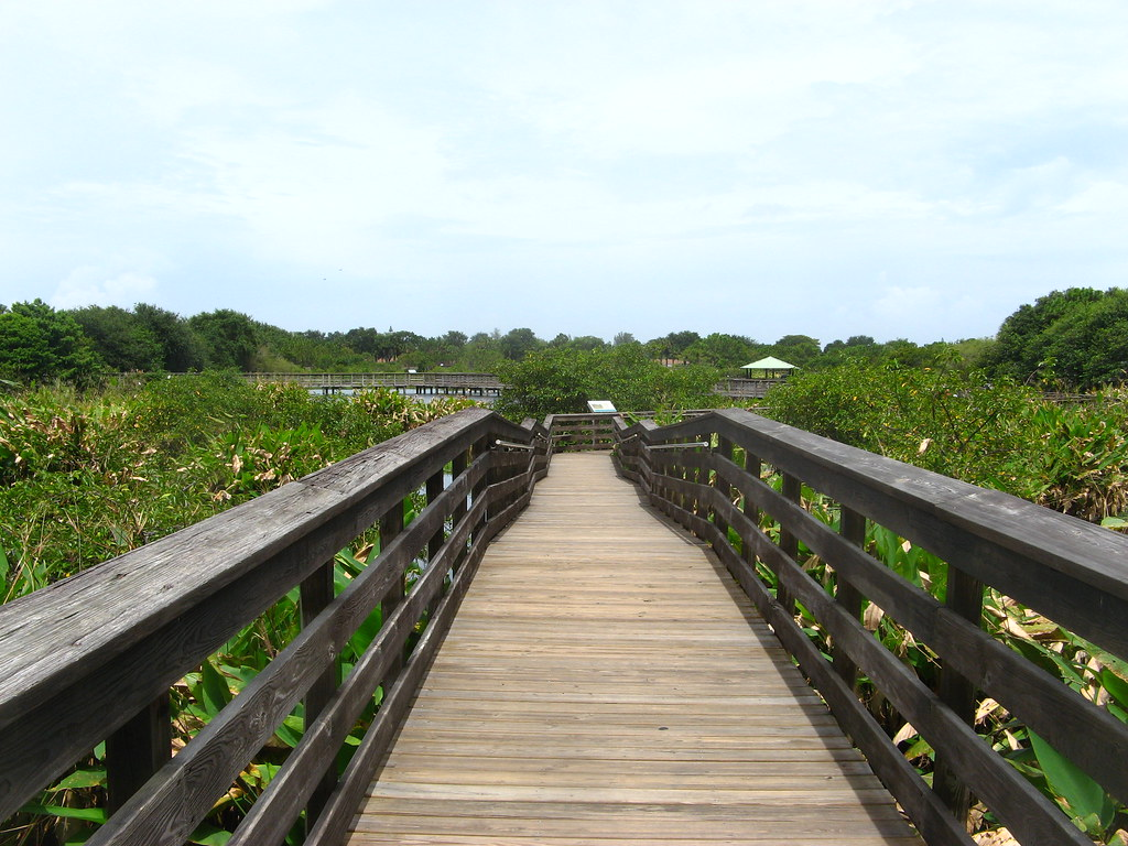 South Florida Summer