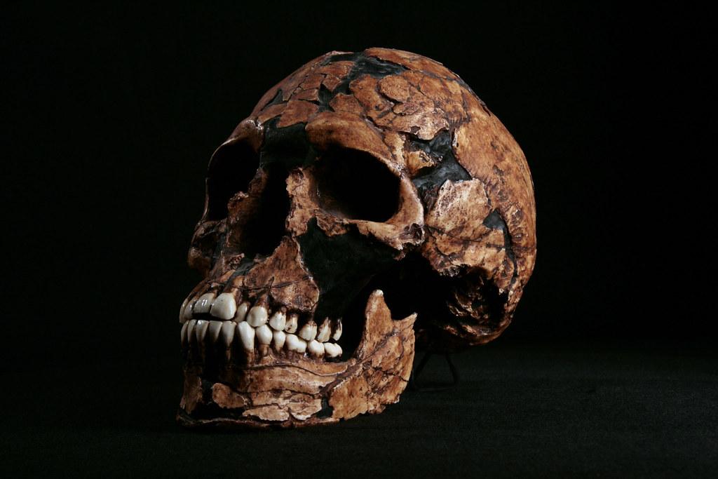 Hominid Skull Homo Sapiens Qafzeh 9 005