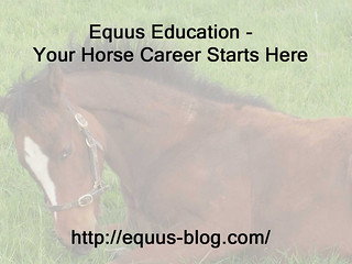 Mentoring for a Horse Career - Would you do it?