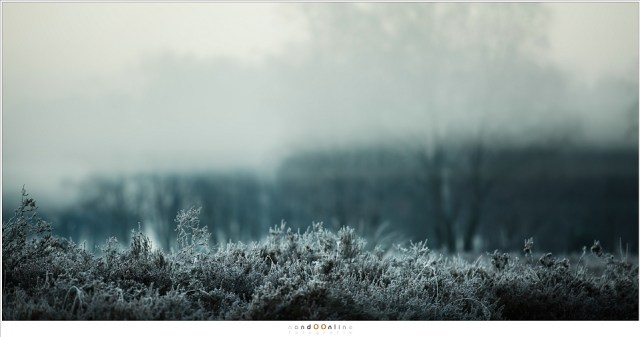 mist, ochtend, strabrechtse heide, nandoonline.nando