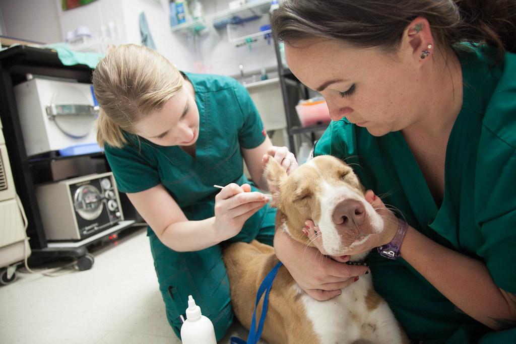 Austin Community College Vet Tech Program  Veterinary