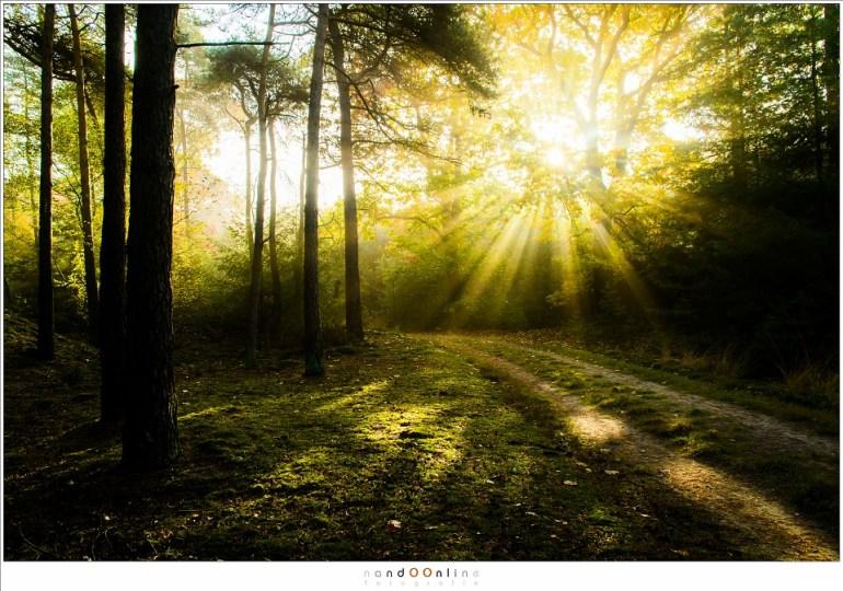 De zon breekt door, schaduwen worden verjaagd. (18mm (equiv FF 27mm); ISO800; f/7,1; t=1/125sec; -0,6EV)