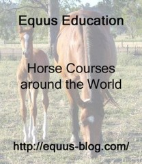 Horse Courses: What do you need to Undertake for Your Career?