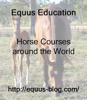 BHS Career Pathways offer some Great Horse Careers | Equus Education