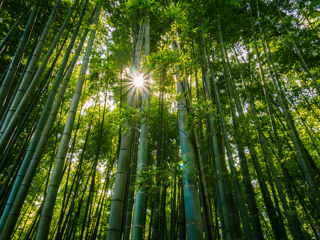3d Wallpaper 4k For Mobile Peeking Sun No This Is Not The Bamboo Forest At