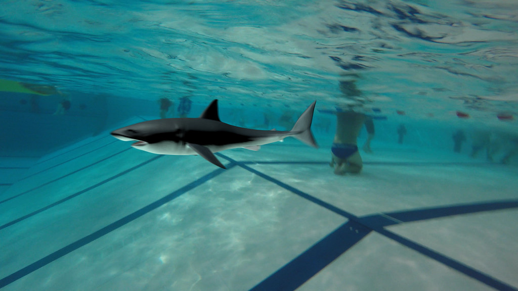 A shark in our pool  Video still taken from an animation